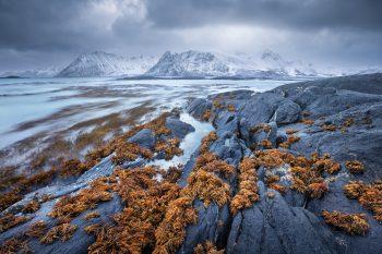 Skalnaté pobřeží zimních Lofot