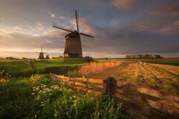 Větrné mlýny mezi pastvinami při jarním východu slunce v Severním Holandsku, Nizozemsko.
