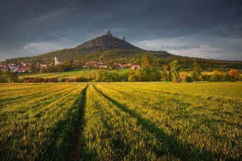 Zřícenina hradu Hazmburk je dominantou Dolního poohří a i celého Českého středhoří Českého