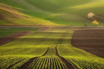 Osázené řádky, zelená a hnědá pole a rozkvetlé biopásy tvoří zajímavé linie charakteristické pro krajinu Slovácka nebo také Moravského Toskánska