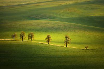 Známá kaštanová alej v zeleném poli u Karlína na Jižní Moravě v srdci Slovácka jako luxusní dekorativní foto obraz
