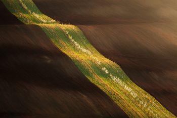 Zelený remízkový pás s rozkvetlou řadou stromů v tmavě hnědém zoraném poli v krajině jarního Moravského Slovácka při jarním foto workshopu