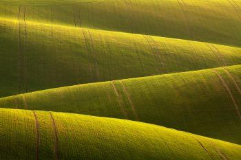 Neskutečně zvlněné pole u Karlína připomínající nekonečný koberec