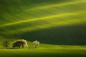 Luxusní fotoobraz rozkvetlých mirabelek v jarních polích Moravského Toskánska