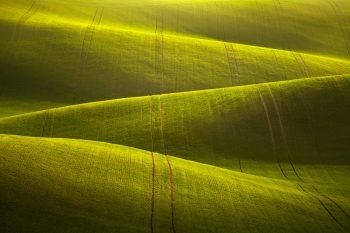 Zvlněné jarní pole Moravského slovácka připomínající mořské vlnobití