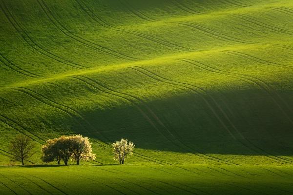Zajímavě zvlněná jarní pole, to jsou hlavní motivy foto workshopu Romanticky zvlněná Jižní Morava