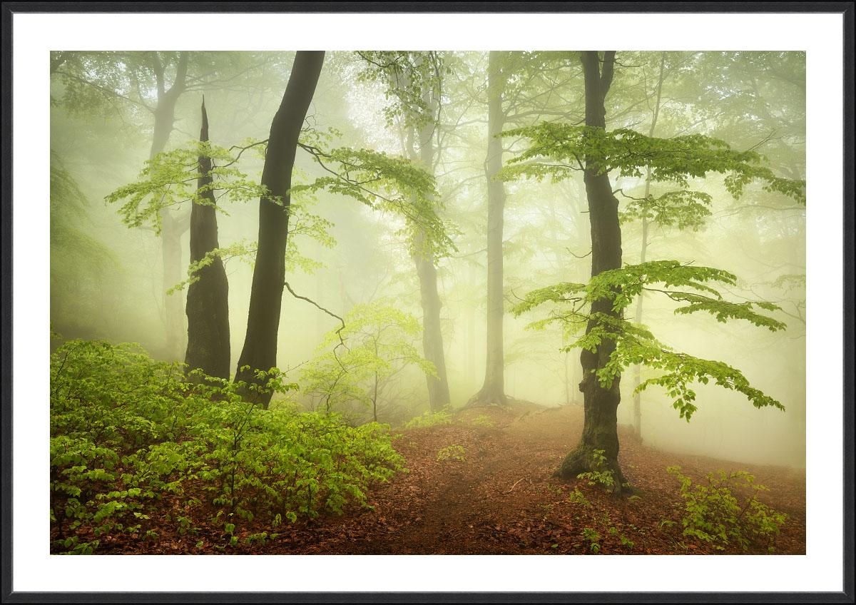 Fotoobraz Mezi stromy z jarního bukového lesa v Krušných horách. Svěží zelená barva listů v kombinaci s bílou paspartou a černým rámem vypadají na zdi interiéru luxusně.