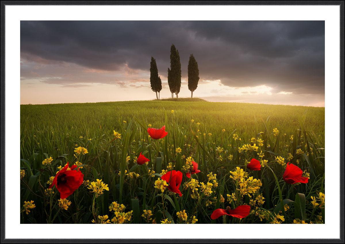 Fotogrfický obraz Rozkvetlé Toskánsko z jarního rána u města Pienza v černém hliníkovém rámu a bílou dekorativní paspartou..