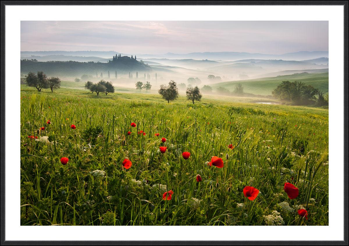 Fotoobraz do obývacího pokoje - Toskánské máky z jarního rána v Toskánsku u města S. Quirico ď Orcia.
