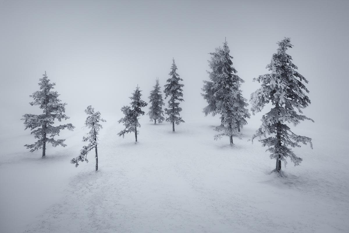 Ojíněné a omrzlé smrky v mlze na zasněžených pláních Krušných hor