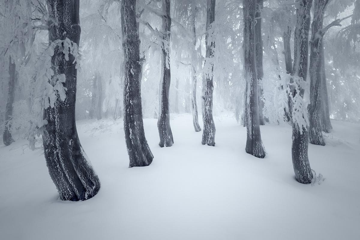Z focení zimní krásy Krušných hor. Zasněžený zimní bukový les s ojíněnými a omrzlými kmeny v Krušných horách