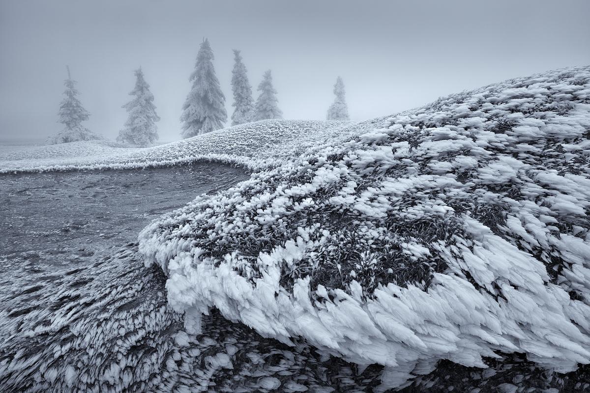 Silná námraza na trávě a stromech na pláních Krušných hor, která tvoří zajímavé linie v mírně zvlněné horní partii hor