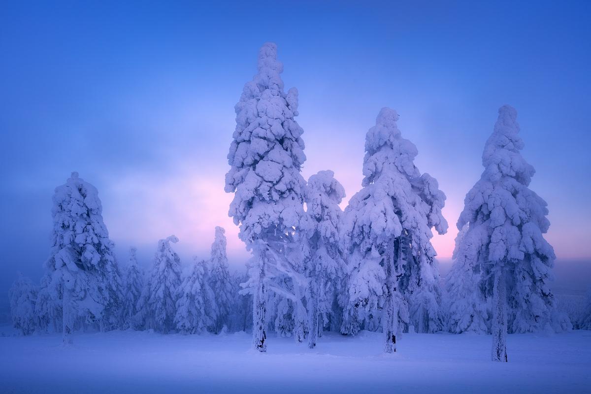 Focení zimní krásy Krušných hor - zasněžené a namrzlé stromy na vrcholu Klínovce po zimním západu slunce v Krušných horách nedaleko obce Boží dar.