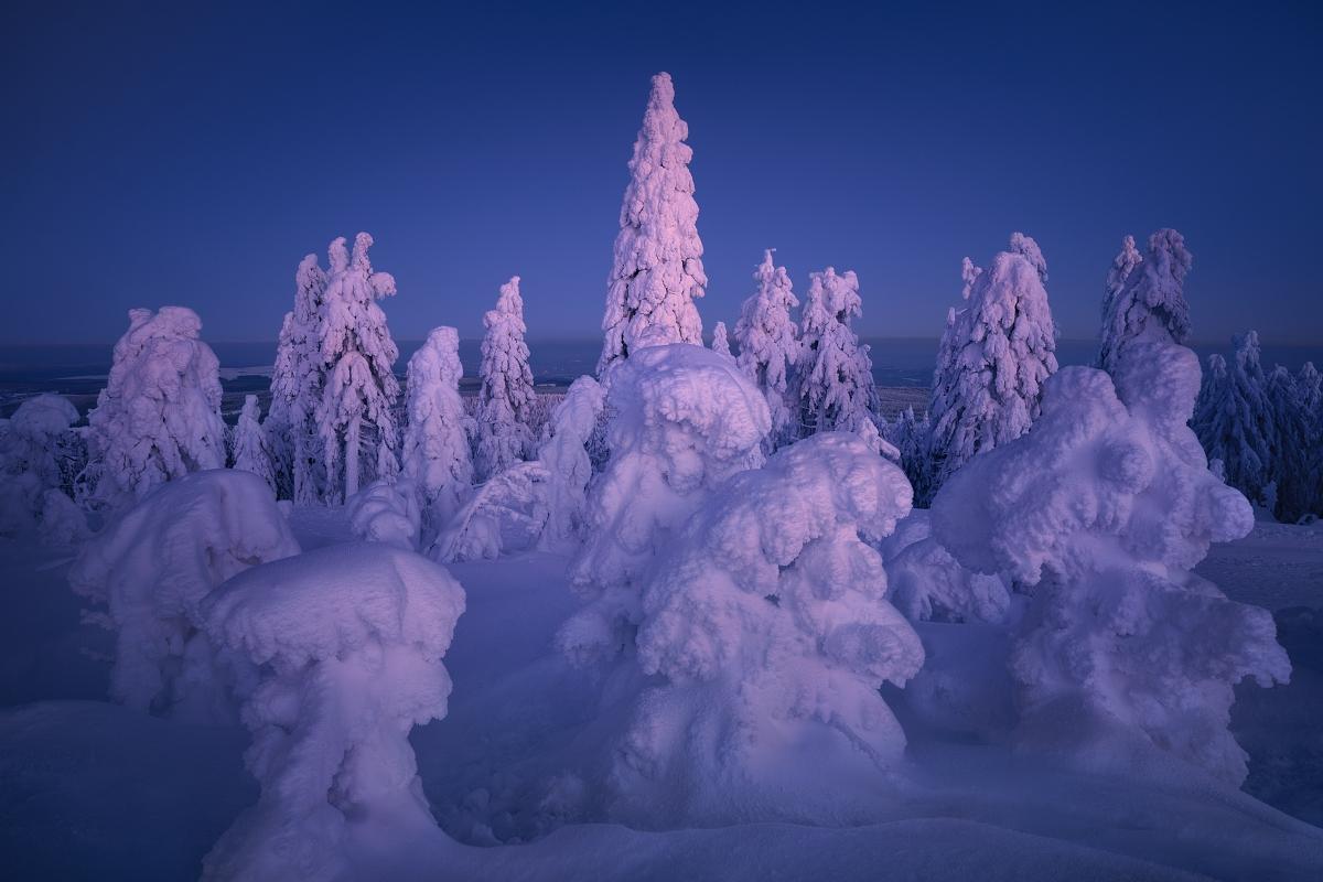 Focení zimní krásy Krušných hor. Omrzlé a zasněžené smrky připomínající bizardní sochy při mrazivém zimním večeru na vrcholu Klínovce v Krušných horách.