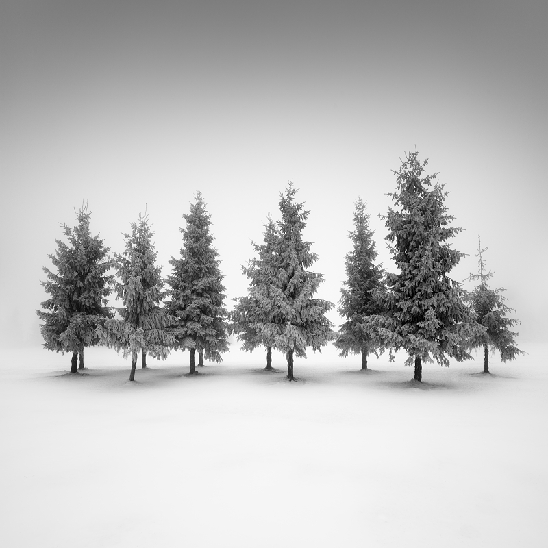 Černobílá minimalistická fotografie ojíněného smrkového háje v zasněžené krajině Krušných hor v Ústeckém krajiny jako motiv pro zajímavý fotoobraz.