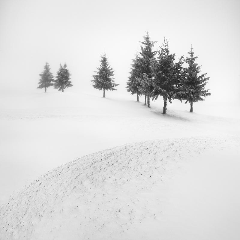 Černobílý minimalistický motiv ze zimních Krušných hor. Namrzlé smrky na mlhavých a zasněžených pláních Krušných hor. To je focení zimní krásy Krušných hor.