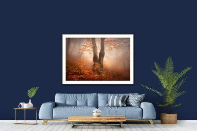 Tucet nejžádanějsích motivů pro fotografické obrazy - fotoobraz v rámu s paspartou z podzimního mlhavého bukového lesa v Krušných horách na stěně obývacího pokoje nebo jiného interiéru