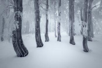Zasněžený zimní bukový les s ojíněnými a omrzlými kmeny v Krušných horách