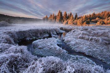 Mrazivé svítání u horského potoka v Krušných horách se silně ojíněnou a namrzlou trávou v popředí a sluncem nasvícenými smrkovými stromy v pozadí
