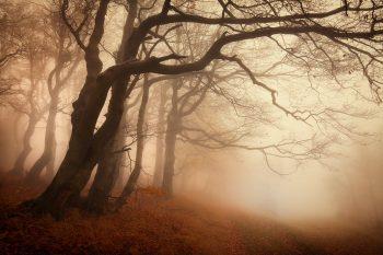 Od pravidelných větrů pokřivené kmeny buků na okraji lesa v Krušných horách jako nejprodávanější fotoobraz lesa