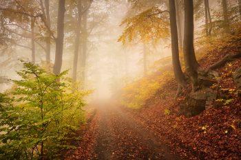 Lesní cesta vedoucí podzimním mlhavým lesem uprostřed Krušných hor