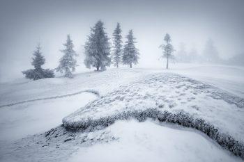 První sníh a mráz na horských pláních Krušných hor s naprzlými smrky, které se strácejí v husté mlze
