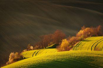 Rozkvetlé jarní remízky v polích Jižní Moravy nedaleko Karlína