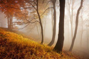 Zlatavé tóny podzimu v bukovém lese na Severu Čech