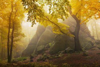 Podzimní mlhavé ráno na úpatí Krušných hor nedaleko Salesiovy výšiny