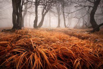 Bukový les se zajímavě pokroucenými kmeny a mohutnou zlatavou trávou v popředí, po prvním sněhu v Krušných horách.